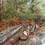 Pourquoi le bois est un investissement durable